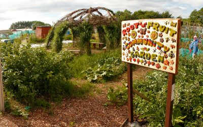 Root n fruit Community garden